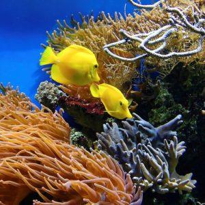 Fish / Aquarium